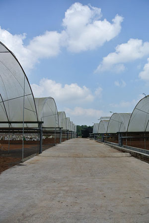 Our growers visit the factory in Sri Lanka March 2013